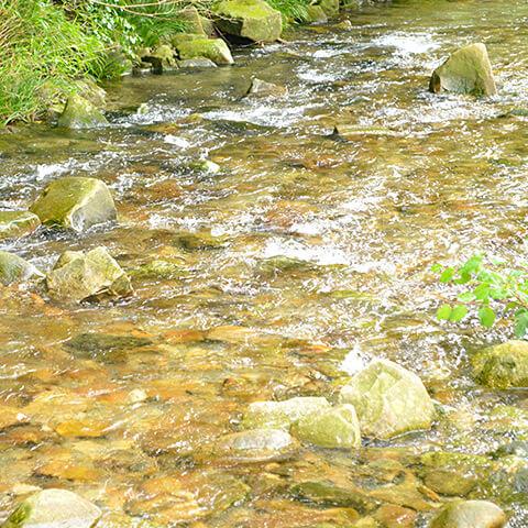 南紀白浜 富田の水